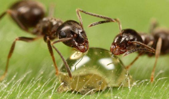 Безопасны для человека народные средства борьбы с насекомыми