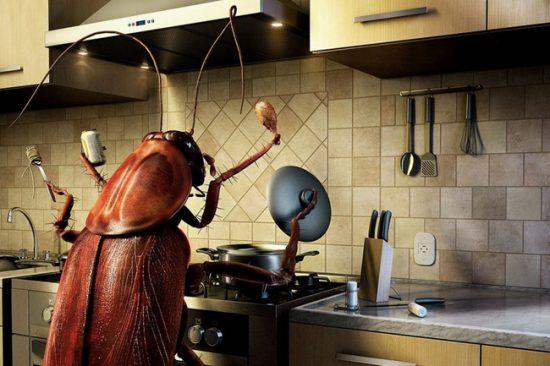 Проводите профилактику, не позволяйте насекомым хозяйничать на вашей кухне